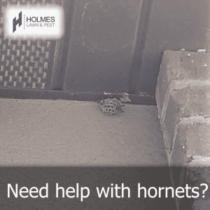 Need help with Hornets?