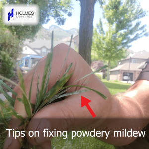 TIPS ON HOW TO FIX POWDERY MILDEW