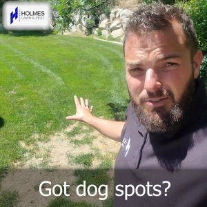 How to treat a lawn with dog spots